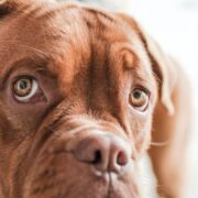 How Animal Law Applies to Many Areas of Mainstream Practice